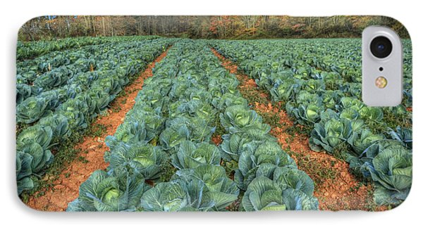 Blue Ridge Cabbage Patch IPhone Case by Jaki Miller