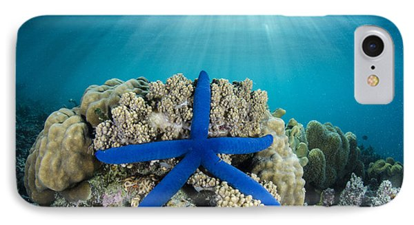 Blue Sea Star Fiji IPhone Case