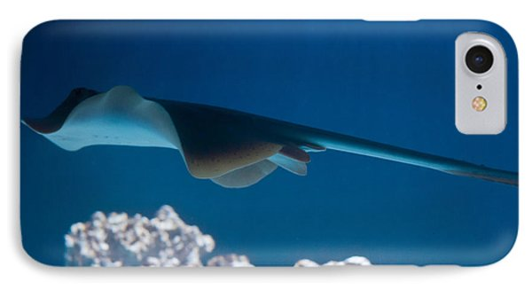 IPhone Case featuring the photograph Blue Spotted Fantail Ray by Eti Reid