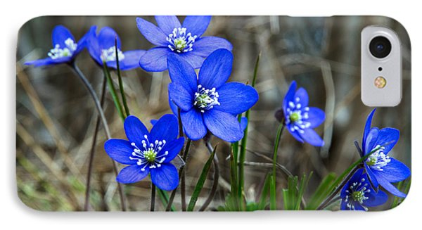 Blue Springtime IPhone Case by Kennerth and Birgitta Kullman