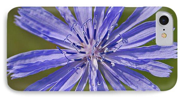 Blue Star... Phone Case by Nina Stavlund