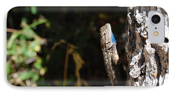IPhone Case featuring the photograph Blue Throated Lizard 1 by Debra Thompson