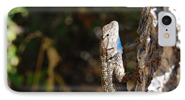 IPhone Case featuring the photograph Blue Throated Lizard 2 by Debra Thompson