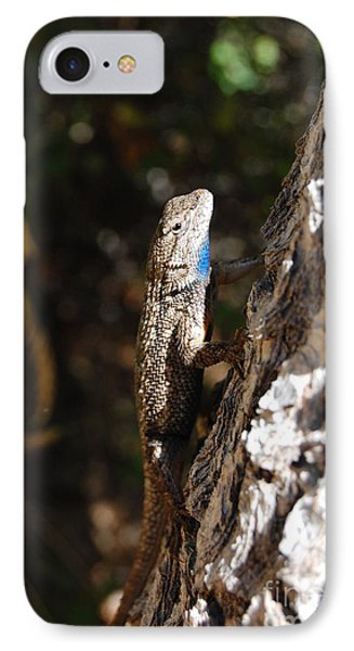 IPhone Case featuring the photograph Blue Throated Lizard 3 by Debra Thompson