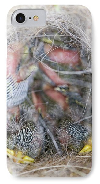 Blue Tit Chicks In A Nest Box IPhone Case by Ashley Cooper