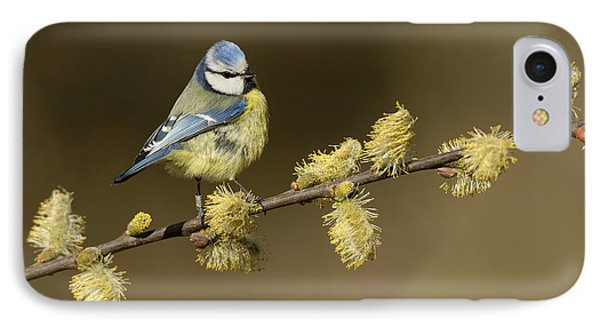 Blue Tit Netherlands IPhone Case