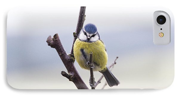 Titmouse iPhone 7 Case - Blue Tit by Tim Gainey