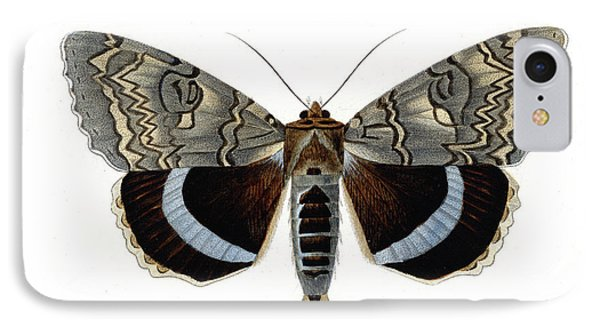 Blue Underwing Moth IPhone Case by Collection Abecasis