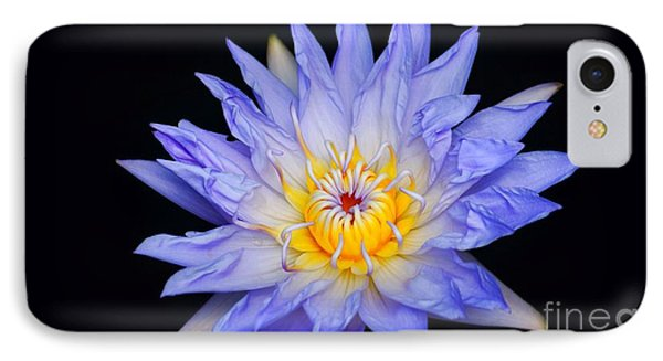 Blue Water Lily Blast...   #   V IPhone Case by Rob Luzier