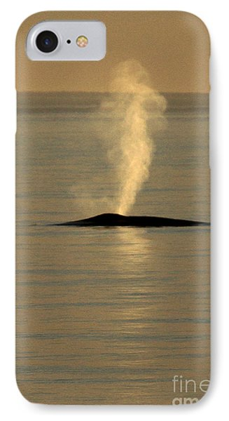 IPhone Case featuring the photograph Blue Whale At Sunset In Monterey Bay California  2013 by California Views Mr Pat Hathaway Archives