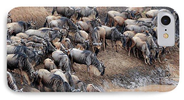 Blue Wildebeest IPhone Case by Bildagentur-online/mcphoto-schulz
