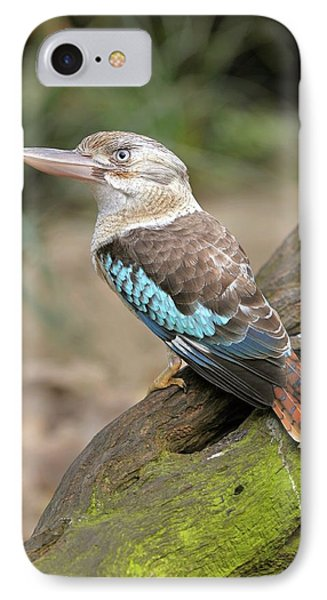 Blue-winged Kookaburra IPhone Case by Bildagentur-online/mcphoto-schulz