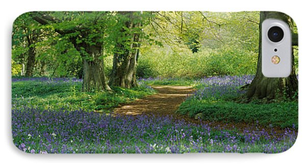 Bluebells In A Forest, Thorp Perrow IPhone Case