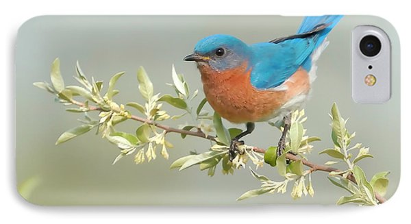 Bluebird Floral IPhone 7 Case by William Jobes