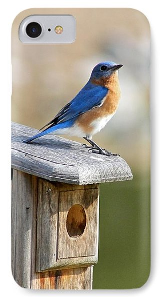 Bluebird House Hunting IPhone Case by Jeanne Kay Juhos