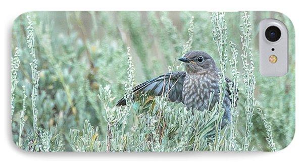 Bluebird In Sage IPhone Case