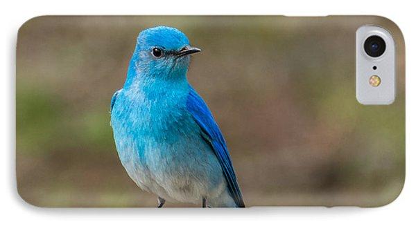 Bluebird In Yellowstone Spring IPhone Case