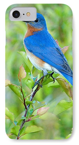 Bluebird Joy IPhone 7 Case by William Jobes