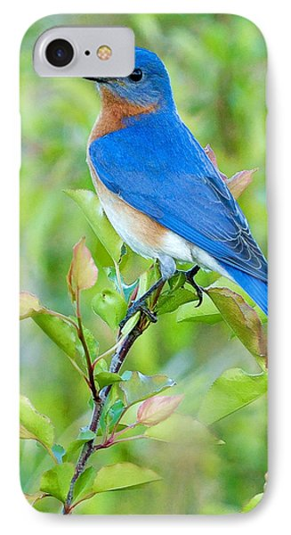 Bluebird Joy IPhone Case by William Jobes
