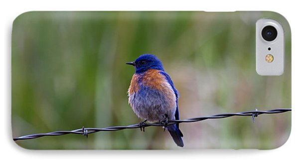 Bluebird On A Wire IPhone 7 Case by Mike  Dawson