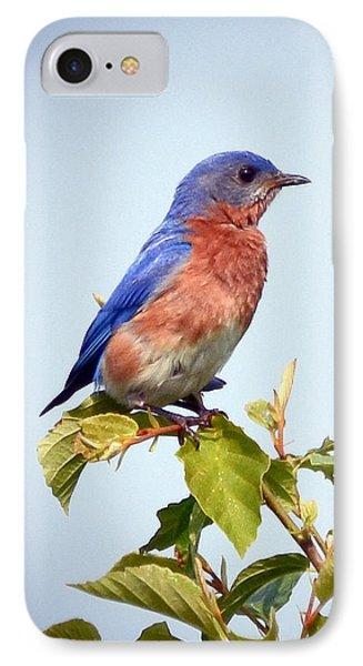Bluebird On Top Phone Case by Kerri Farley