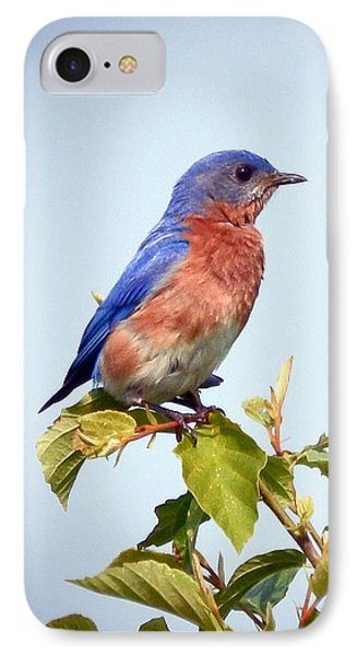 IPhone Case featuring the photograph Bluebird On Top by Kerri Farley