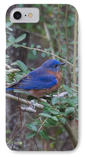 IPhone Case featuring the photograph Bluebird by Patricia Schaefer