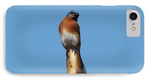 Bluebird Phone Case by Theresa Willingham