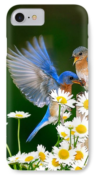Bluebirds And Daisies IPhone Case by Randall Branham