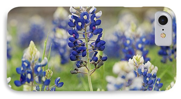 Bluebonnets IPhone Case by John Maffei