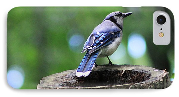 IPhone Case featuring the photograph Bluejay by Alyce Taylor