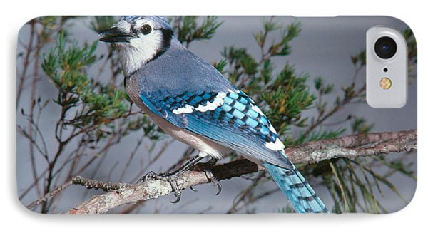 Bluejay Calling IPhone Case by John S. Dunning