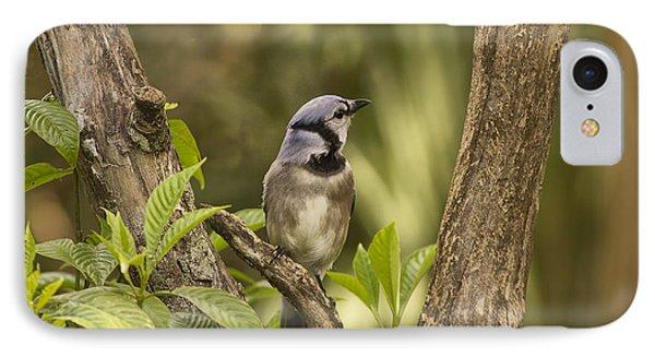Bluejay In Fork Of Tree IPhone Case by Anne Rodkin