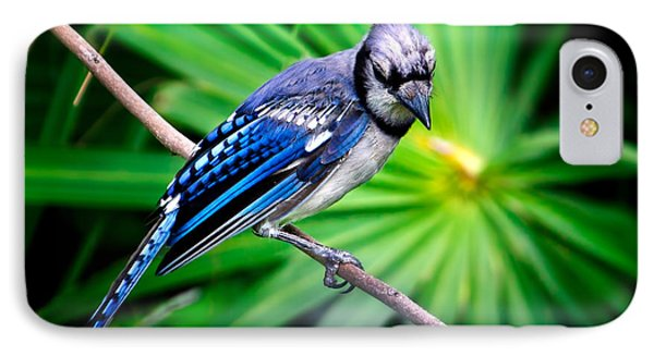 Thoughtful Bluejay IPhone Case by Mark Andrew Thomas
