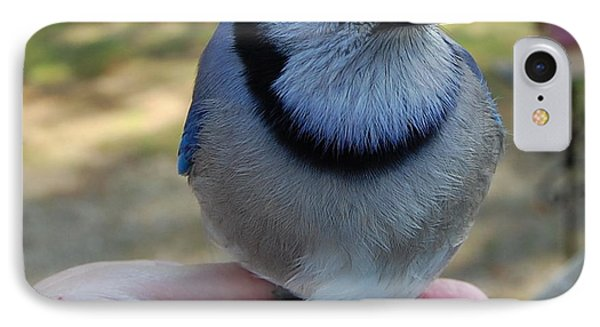 IPhone Case featuring the photograph Bluejay by Mim White