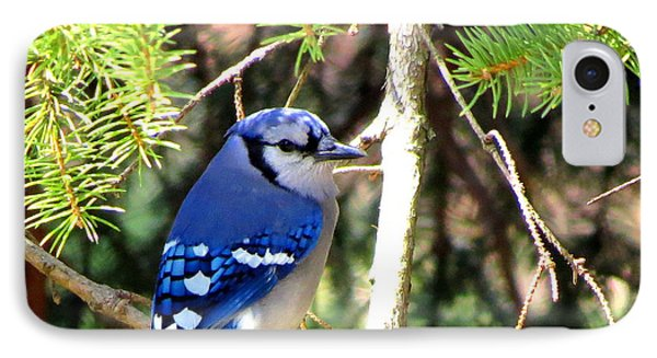 Bluejay Phone Case by Stephen Melcher