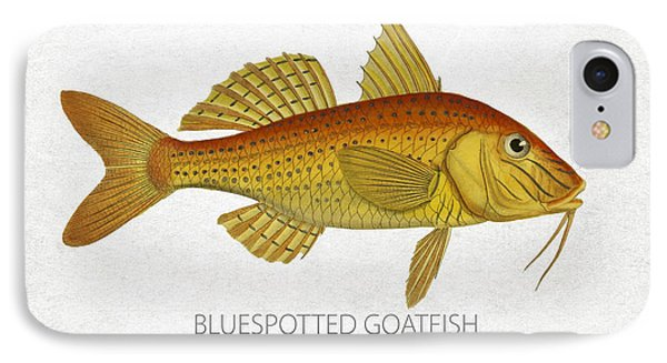 Bluespotted Goatfish IPhone Case by Aged Pixel