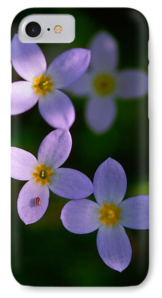 IPhone Case featuring the photograph Bluets With Aphid by Marty Saccone
