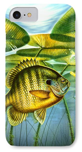 Blugill And Lilypads IPhone Case by Jon Q Wright