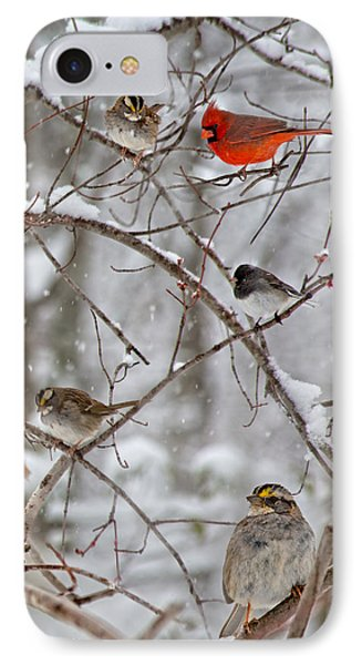 Blushing Red Cardinal In The Snow IPhone Case