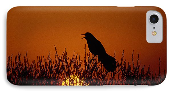 Boat-tailed Grackle Cassidix Mexicanus IPhone Case by Panoramic Images