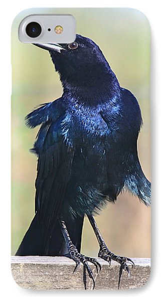 Boat-tailed Grackle IPhone Case