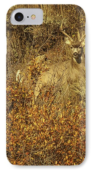 IPhone Case featuring the photograph Bobby Buck by Daniel Hebard