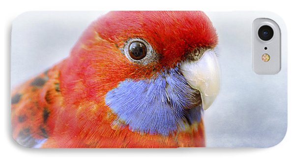 Bobby The Crimson Rosella Phone Case by Terri Waters