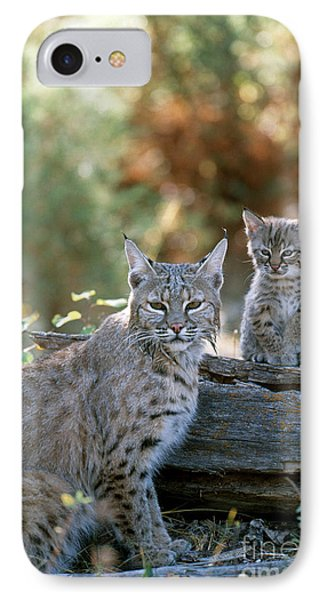 Bobcat Adult And Young Lynx Rufus IPhone Case by Art Wolfe