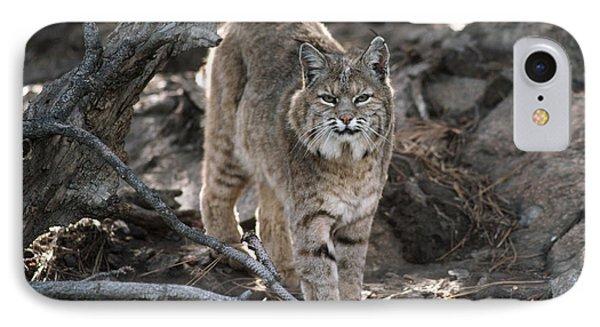 Bobcat Adult Portrait Montana IPhone Case by Tim Fitzharris