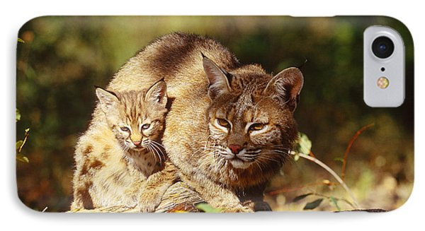 Bobcat And Young, Montana IPhone Case by Art Wolfe
