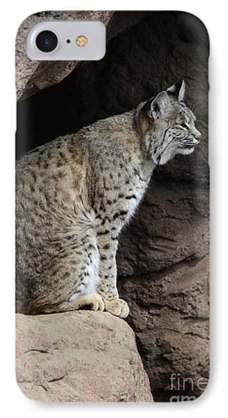 Bobcat IPhone Case by Bob Christopher