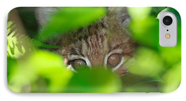 Bobcat IPhone Case by Brian Magnier
