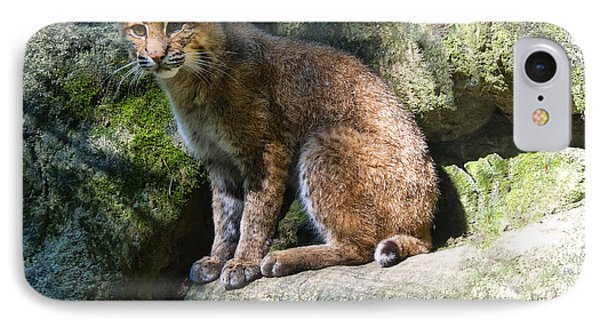 Bobcat IPhone Case by Chris Flees